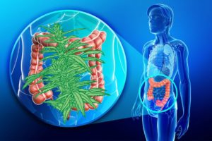 CBD Helps Your Digestive System